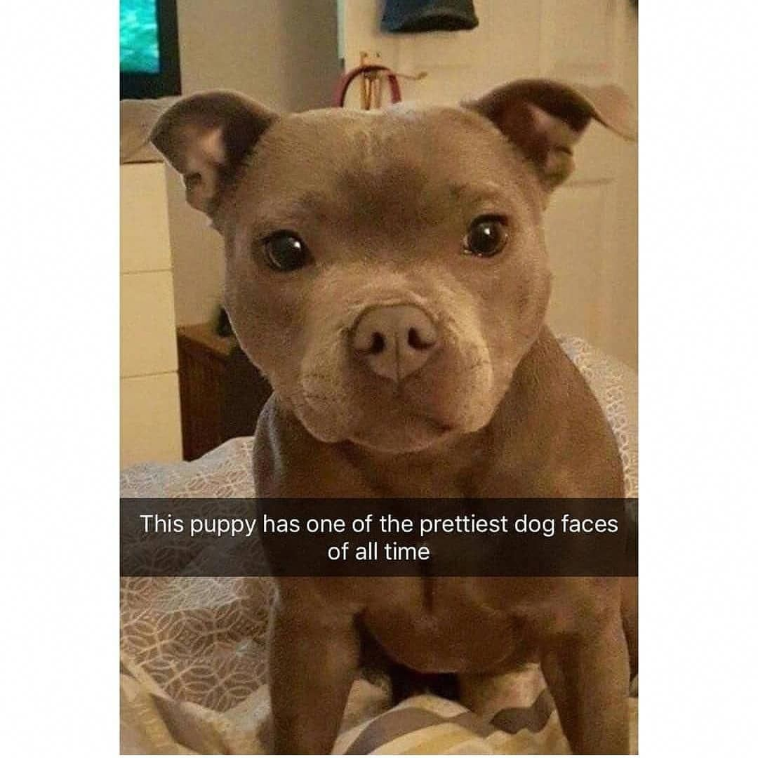 Dogmania1 Instagram Posts Videos Stories On Webstaqram Com
