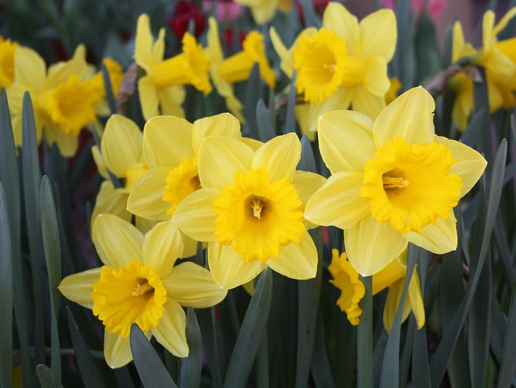 pretty yellow things - Google Search   Let the Sun Shine ...