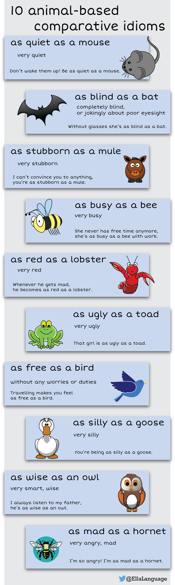 10 Animal Based Comparative Idioms Great For Esl And Ell