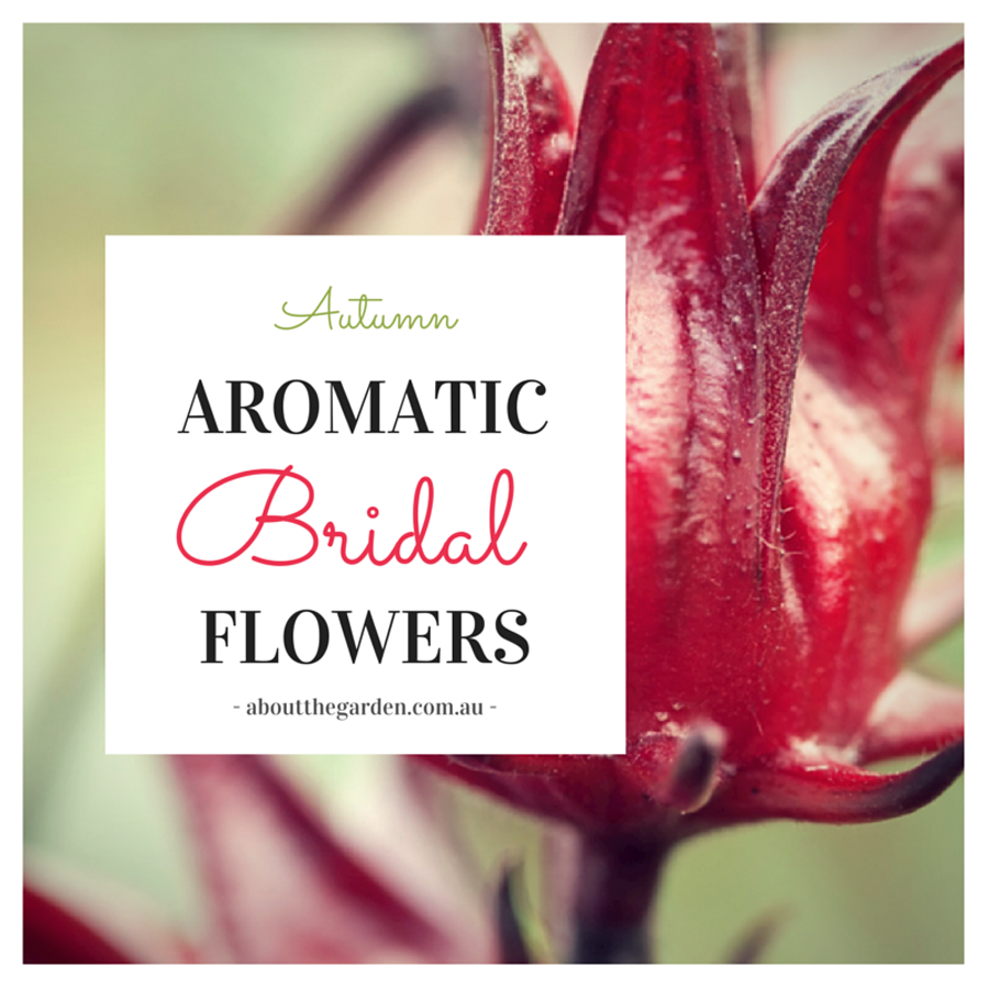 Autumn Wedding Bouquet Ideas Aromatic Bridal Flowers with About the ...