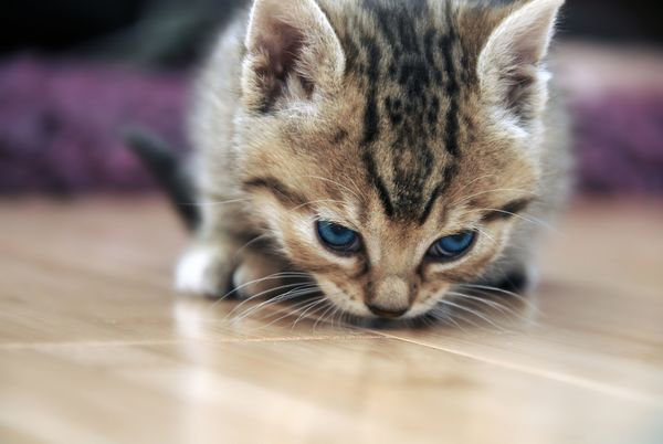 Why Do Cats Like Earwax And Other Strange Scents Cats Cute Animals Cat Care
