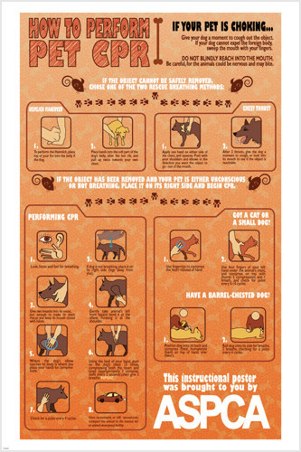 Pet Cpr Instructional Poster 24x36 Unique Educational Animal Friendly Hot New In 2020 Pet Health Cheap Pet Insurance Cat Illnesses