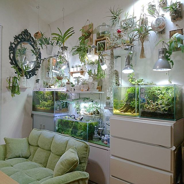 #botanical #plants #aquarium. Living Room.