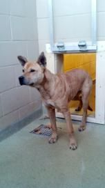 beaufort county animal control