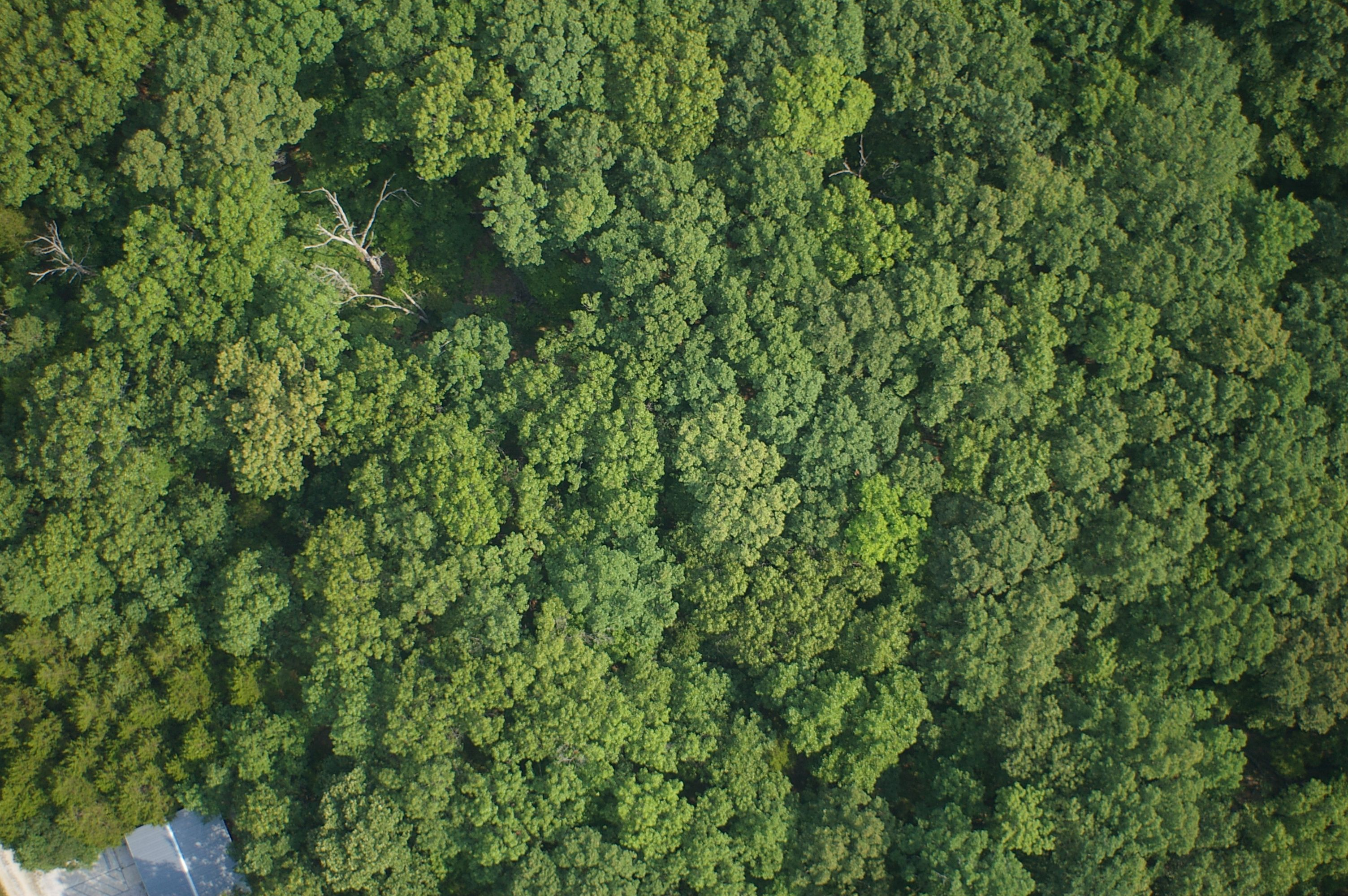 Trees Top View Forest