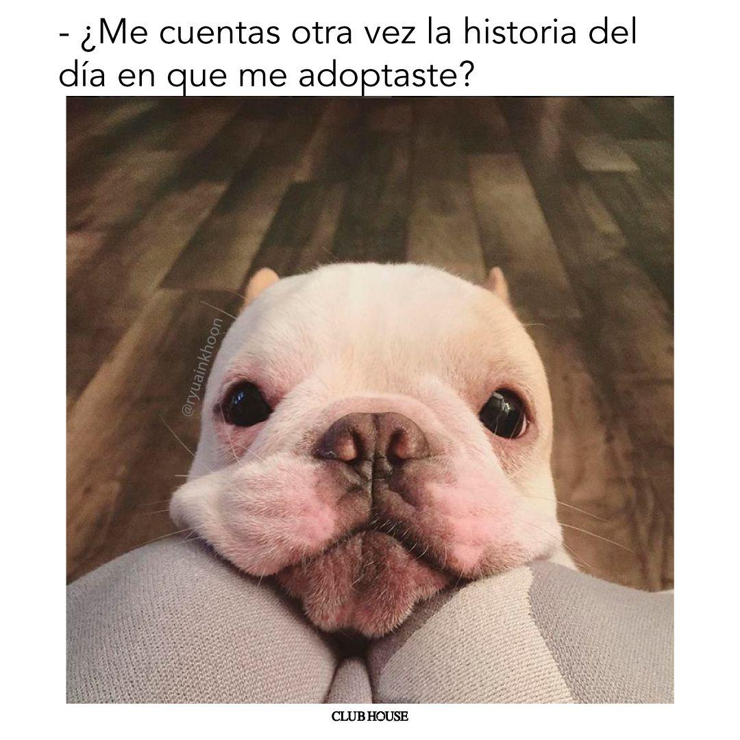 Meme Perro Perros Memes Adoptar
