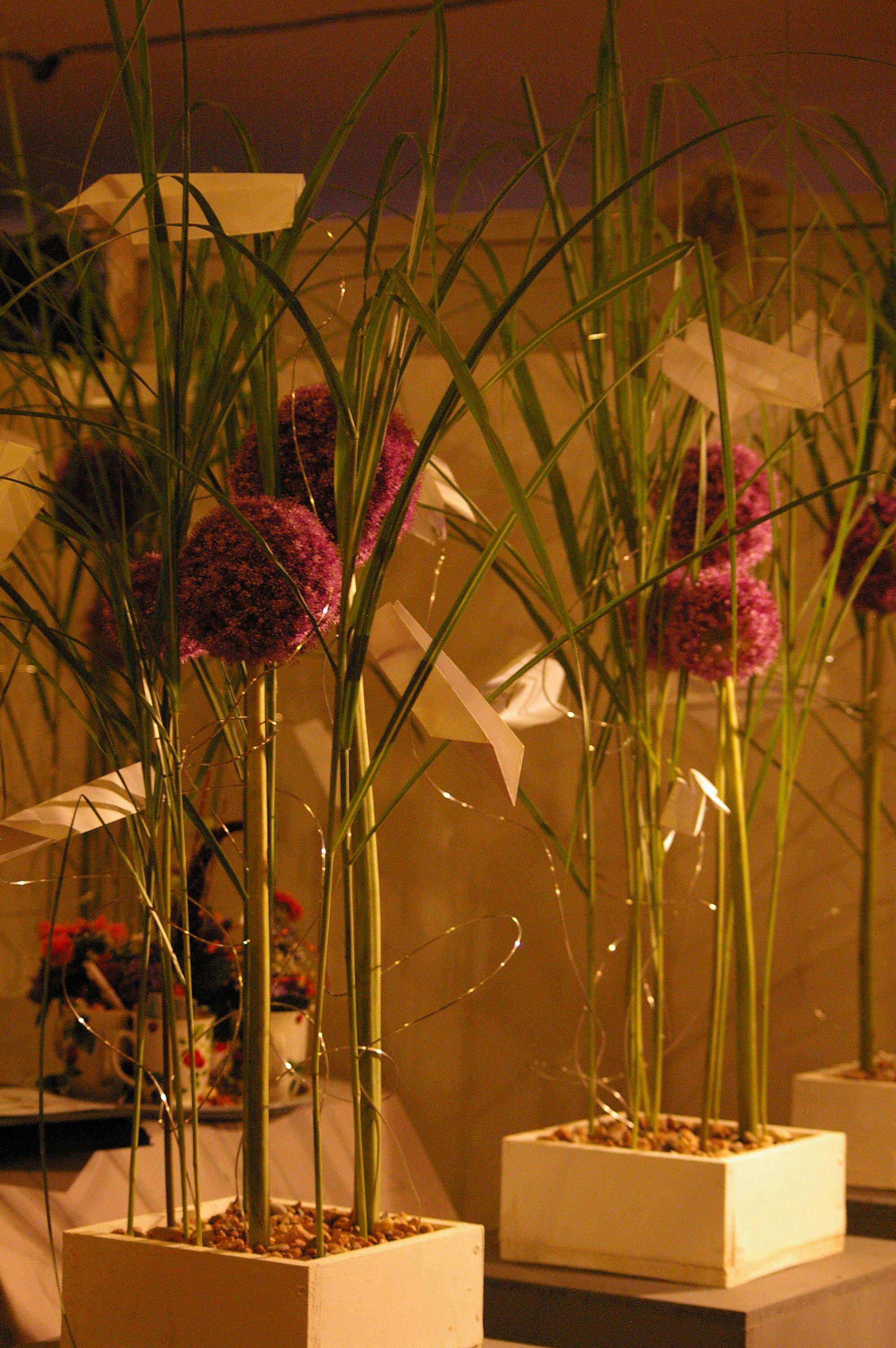 Allium mit Synthetischer Steckhilfe und Sandabdeckung