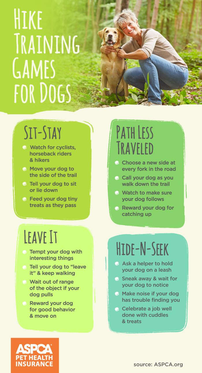 Try these creative summer games with your pet.