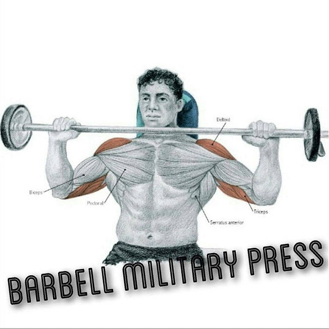 barbell military press exercise - 736×736