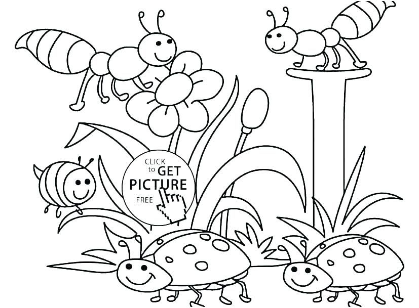 Free Printable Springtime Coloring Pages Spring For Adults Pdf Sheets Kindergarten Page Spring Coloring Sheets Bug Coloring Pages Insect Coloring Pages