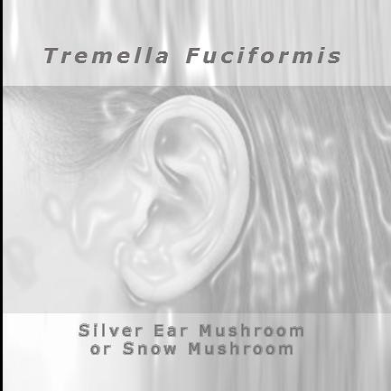 Tremella Fuciformis In 2020 Stuffed Mushrooms Ear Skin Care