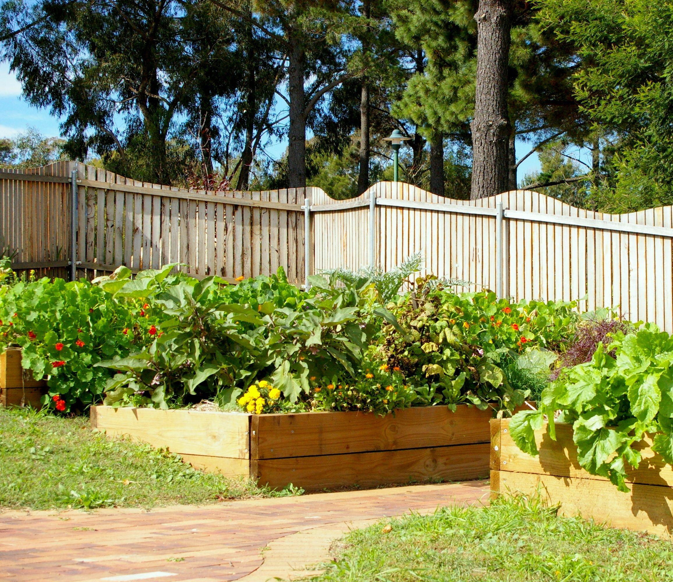 vegetable garden at orana steiner in canberra australia