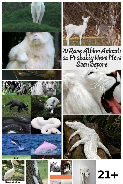 Photo of 21  Albino Animals Eyes Ideas