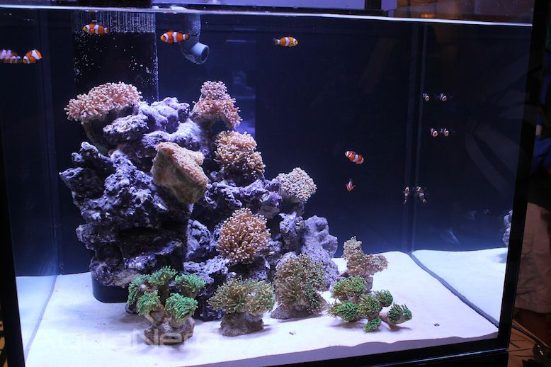 Beautiful Reef Octopus Luxury Aquariums