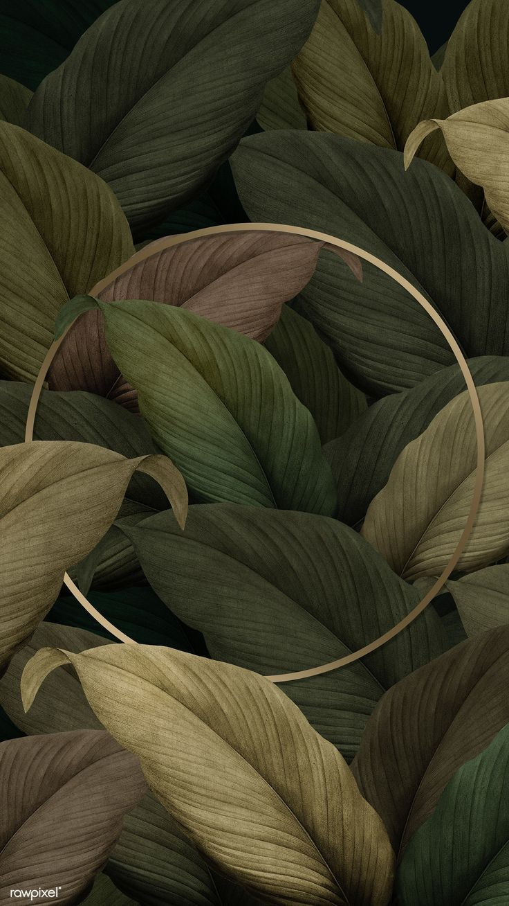 Gold round frame on tropical leaves background premium