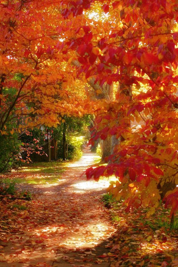 Let's walk in the joyful colors of life