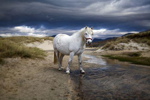 Luskentyre+pony