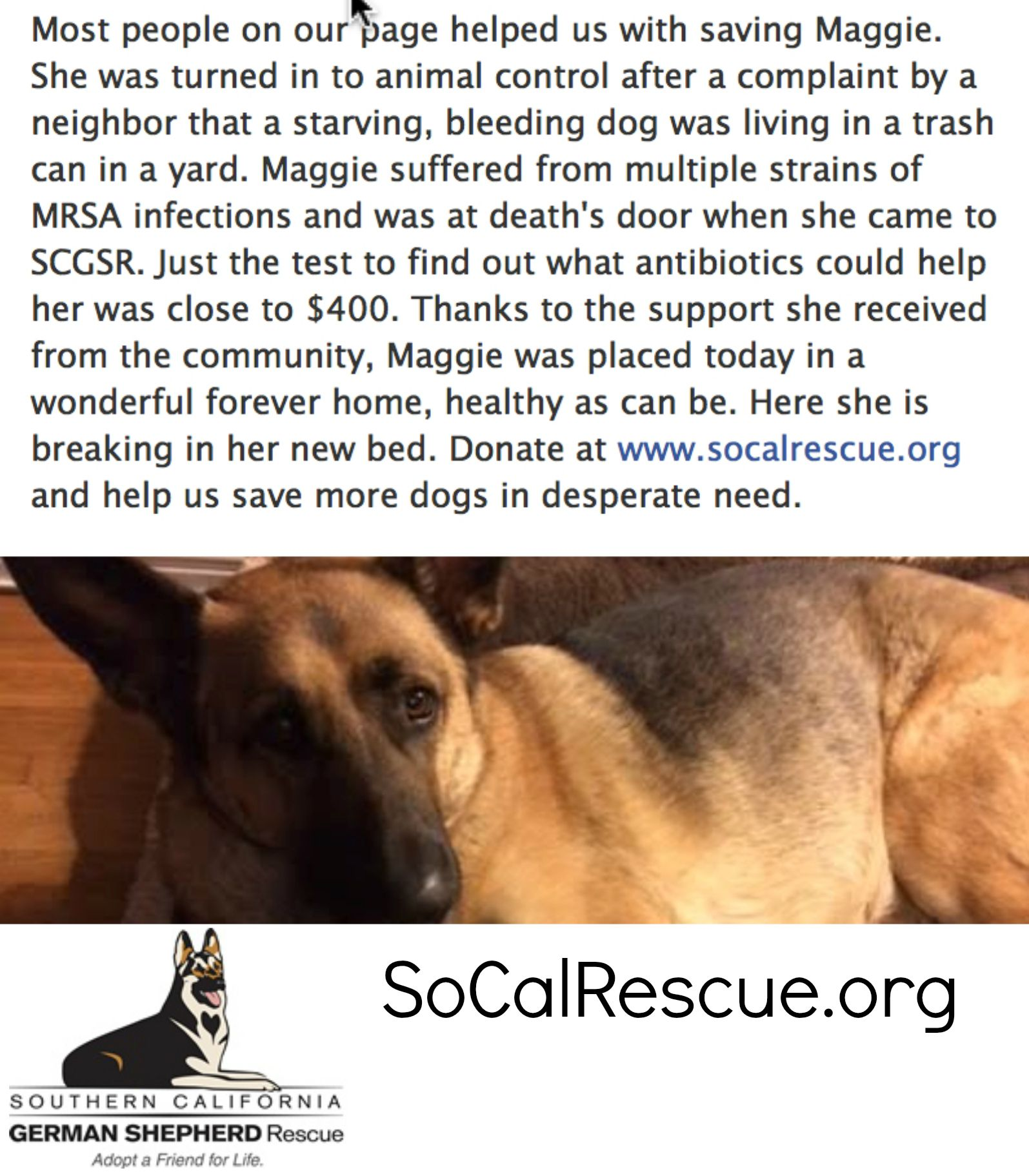 Pin By Southern California German Shepherd Rescue On Happy Tails