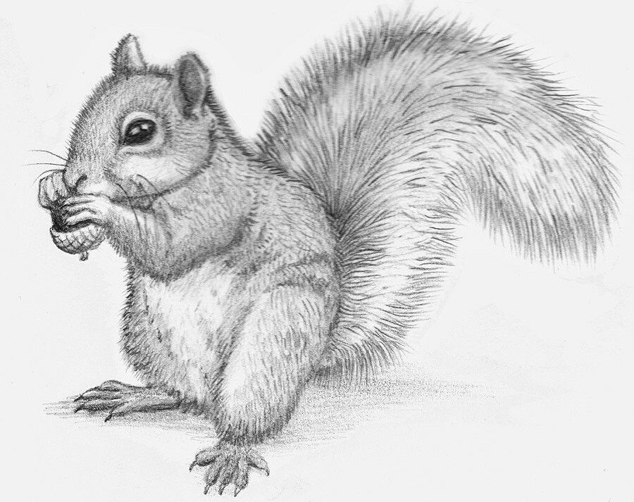 squirrel drawing tattoo in