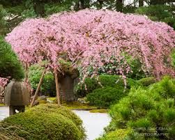 Image result for portland japanese garden The Flat Garden