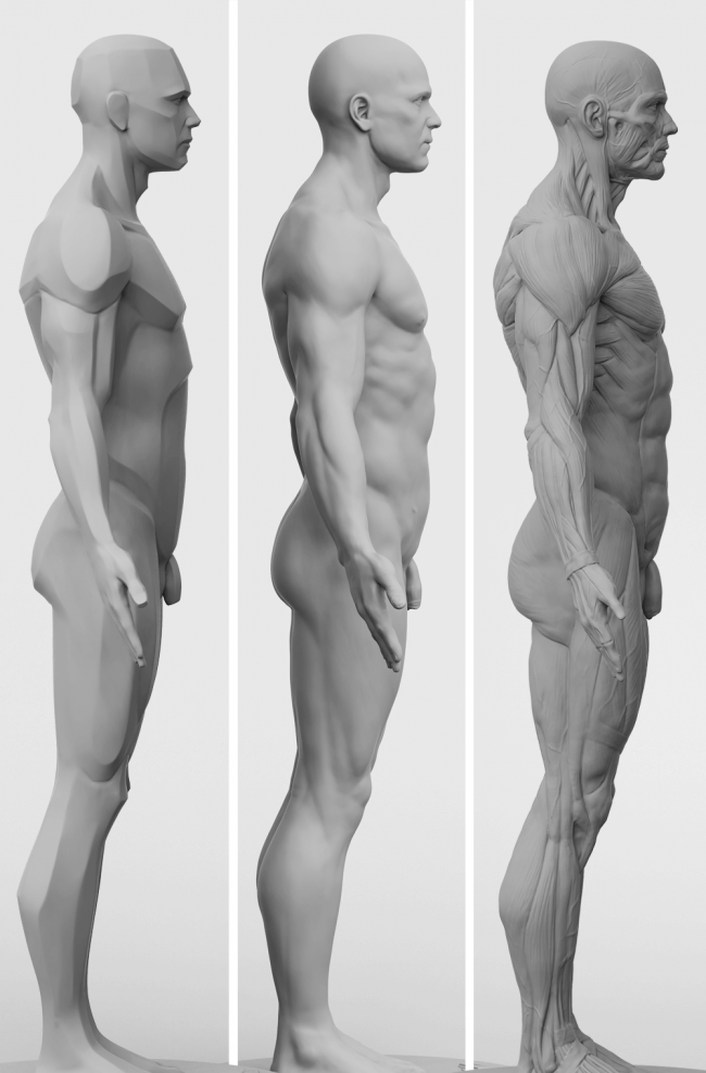 3dtotal anatomy 3 piece set of male figures reference pinterest