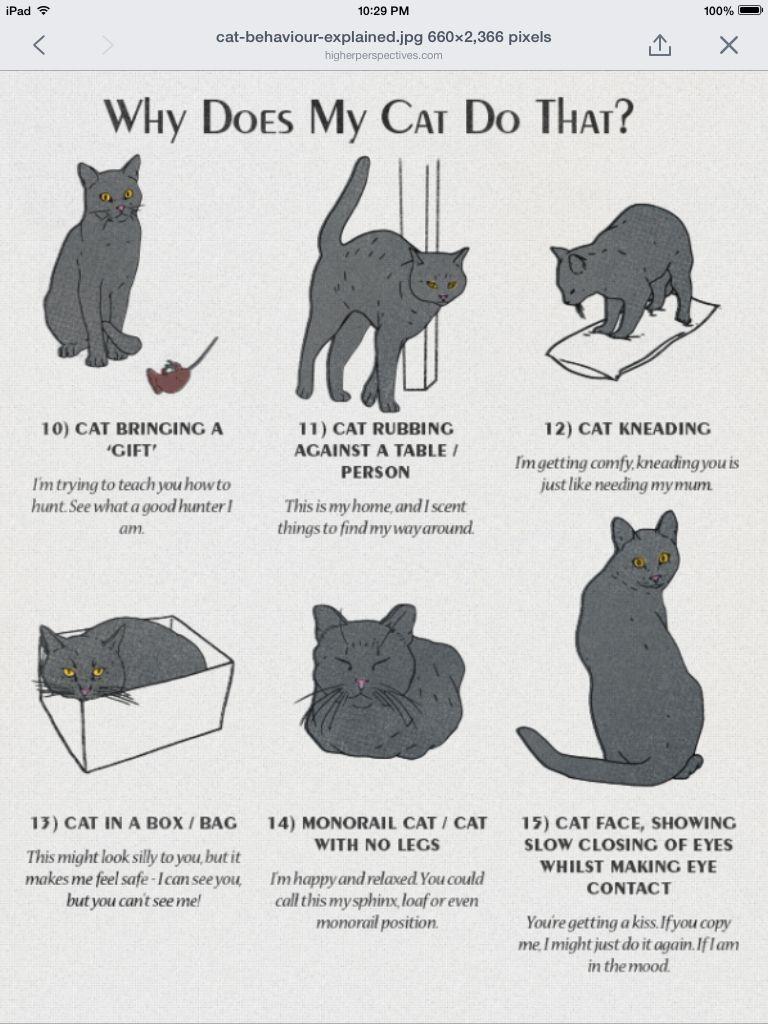 Facts About Cat Behavior (InfoGraphic) Behaviour More