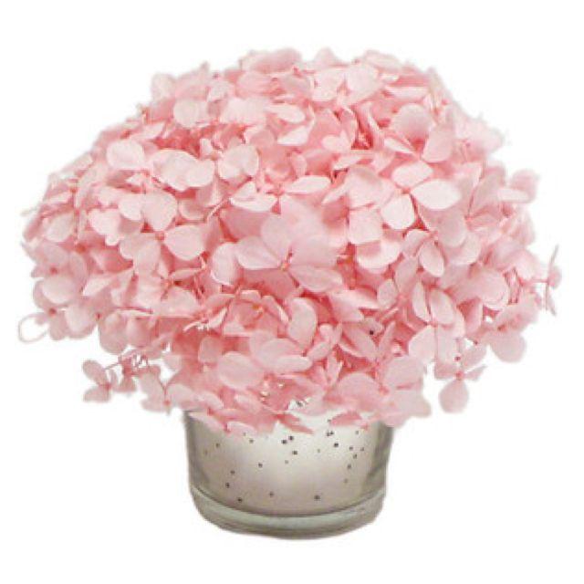 Bougainvillea 4in Pink Hydrangea