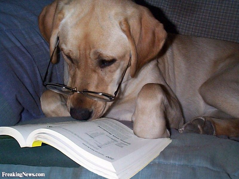 Funny Picture Books About Dogs