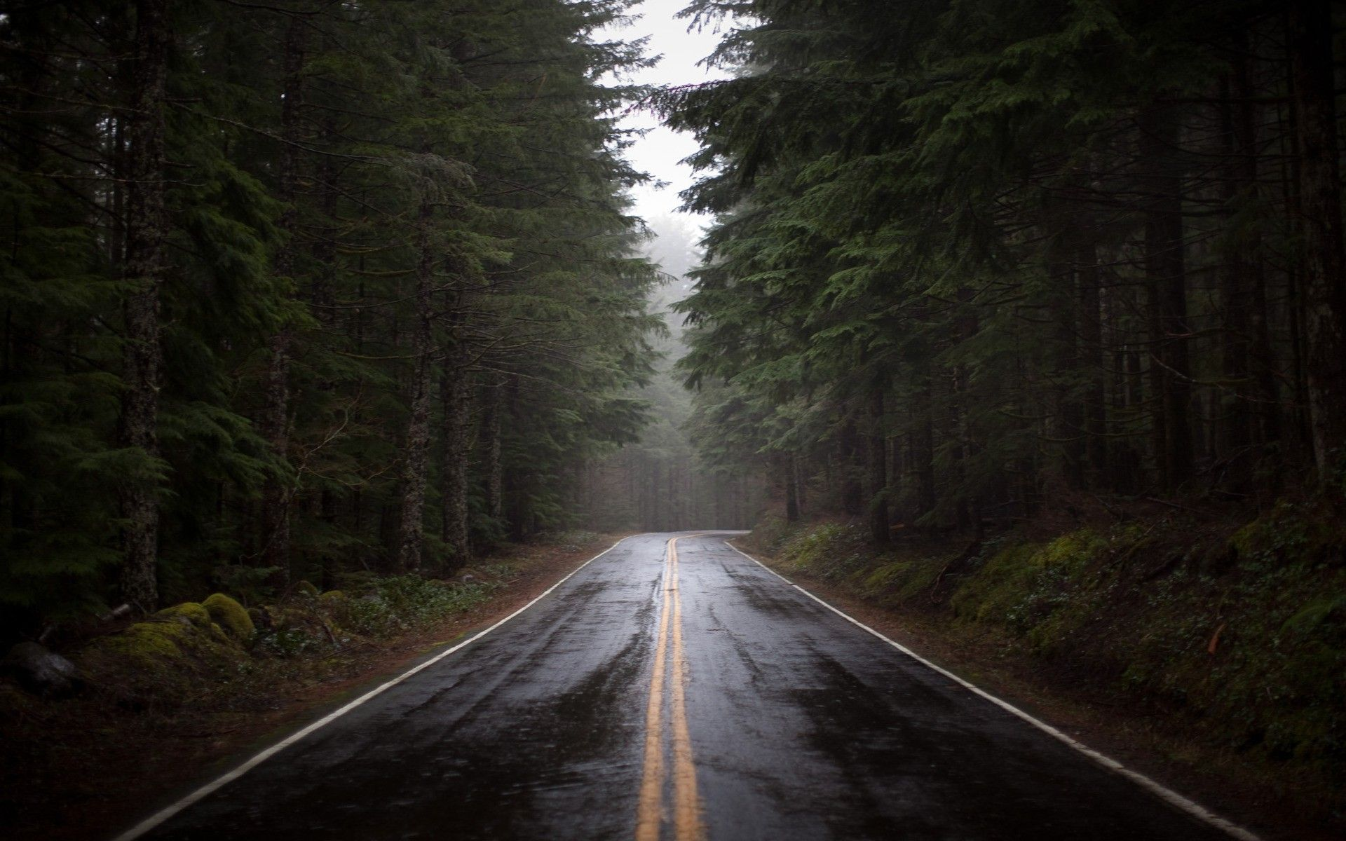 nature trees rain forest wet roads Wallpaper (1715000