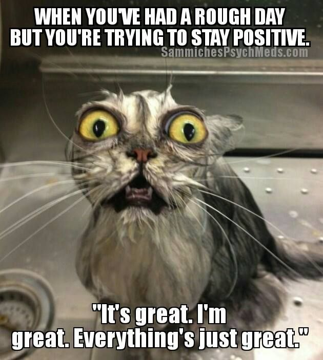 We've all had these days! #parenting #parents #moms #dads #kids #children #funny #cats