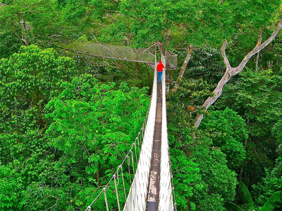 Name Amazon Canopy Walkway Tours Location Iquitos Peru & Name: Amazon Canopy Walkway Tours Location: Iquitos Peru ...