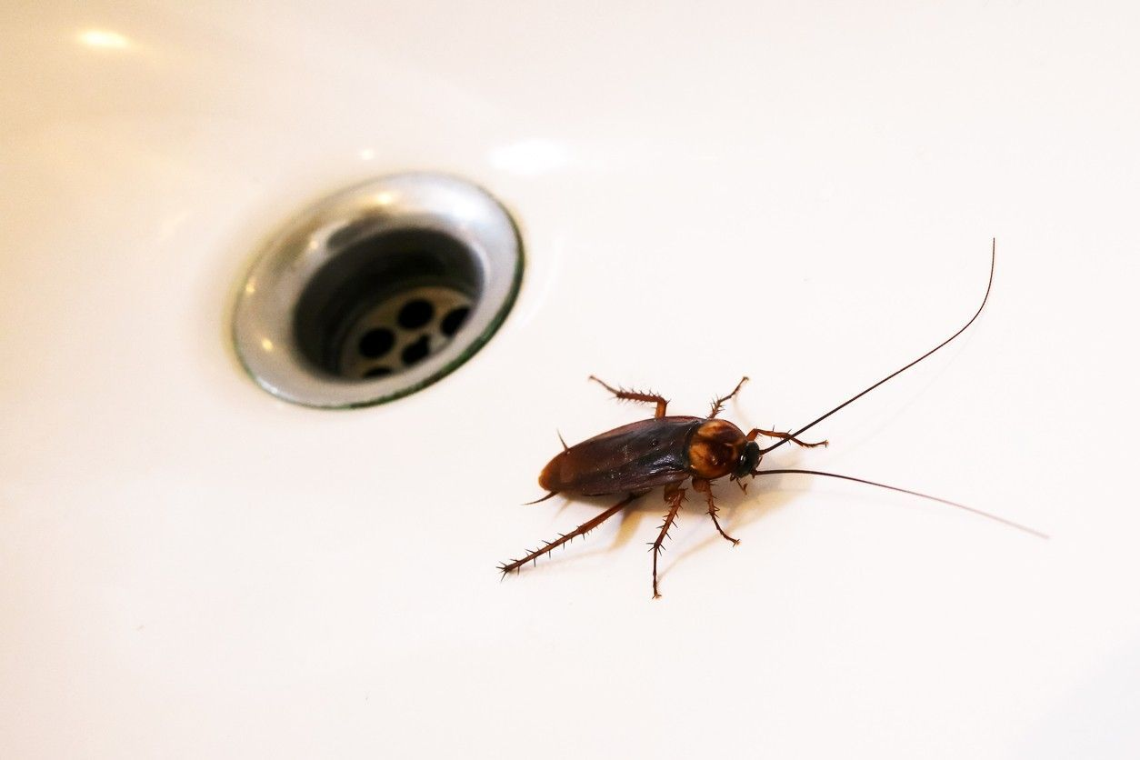 Woman Lived With Cockroach In Her Ear For 9 Days After It Crawled In While She Was Sleeping Kill Roaches Roaches Roach Infestation
