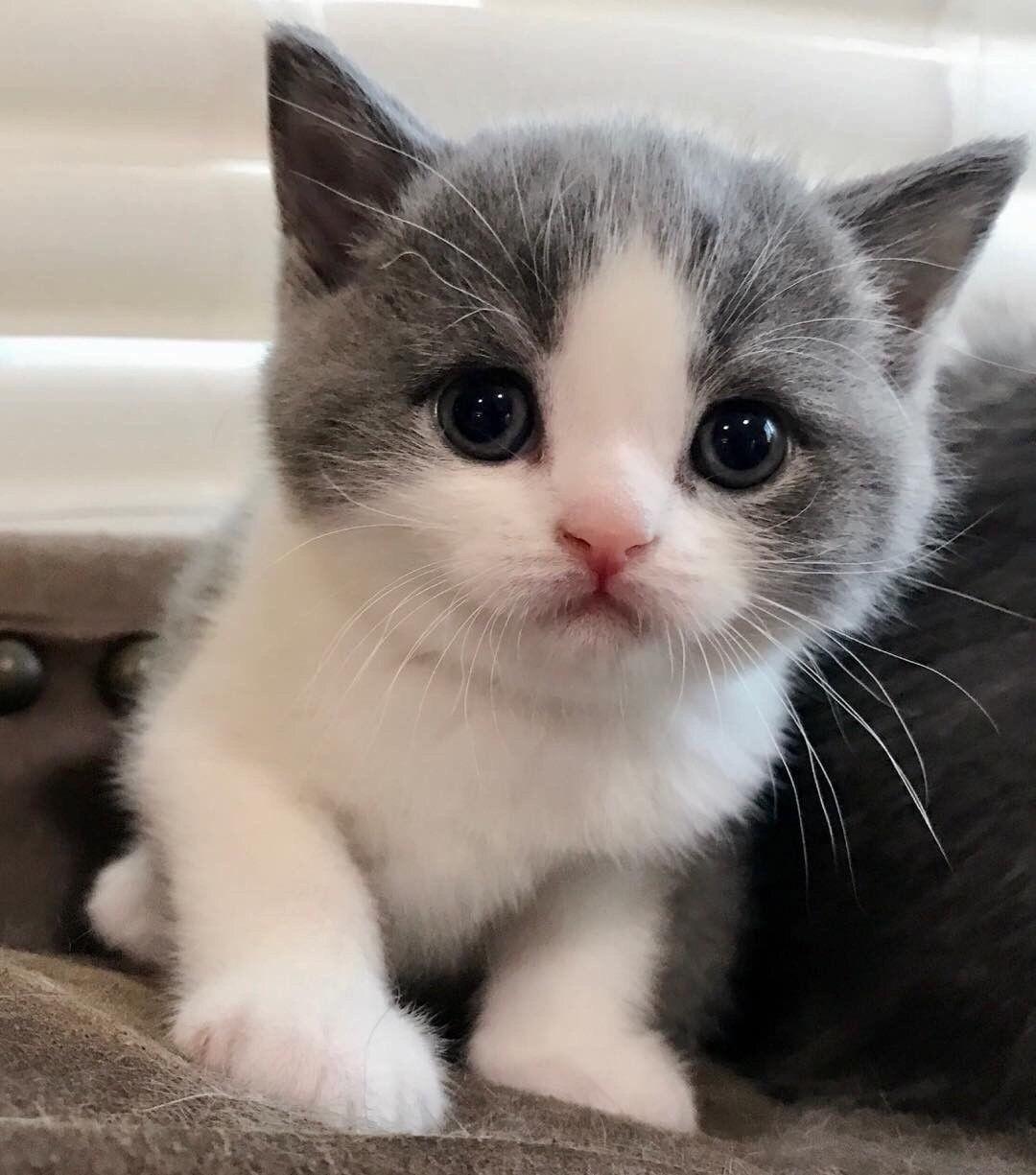 """ettaarlene """"cat love """" Cute baby cats, Kittens cutest"""