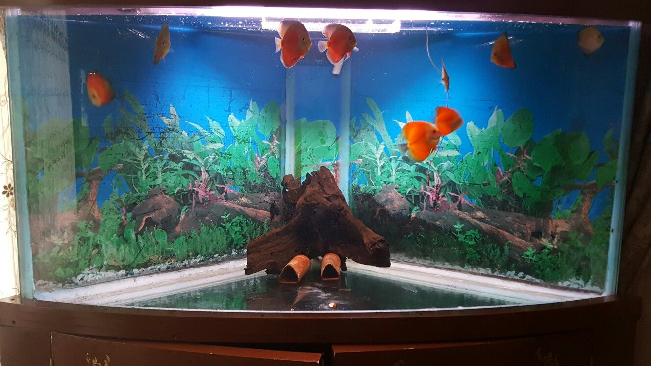 Aquarium fish tank price - Fish Aquarium Price In Pakistan