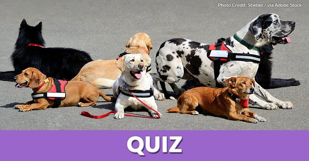 Quiz Are These Statements About Service Dogs True Or False