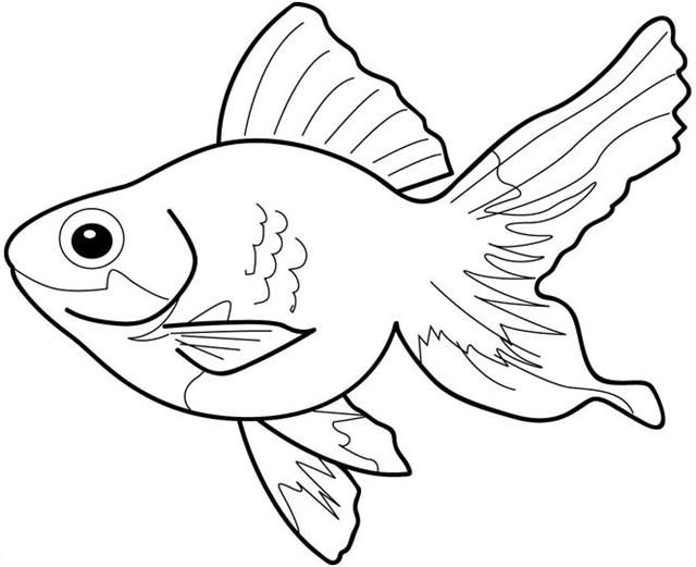 Printable Fish Coloring Sheets For Kids Free
