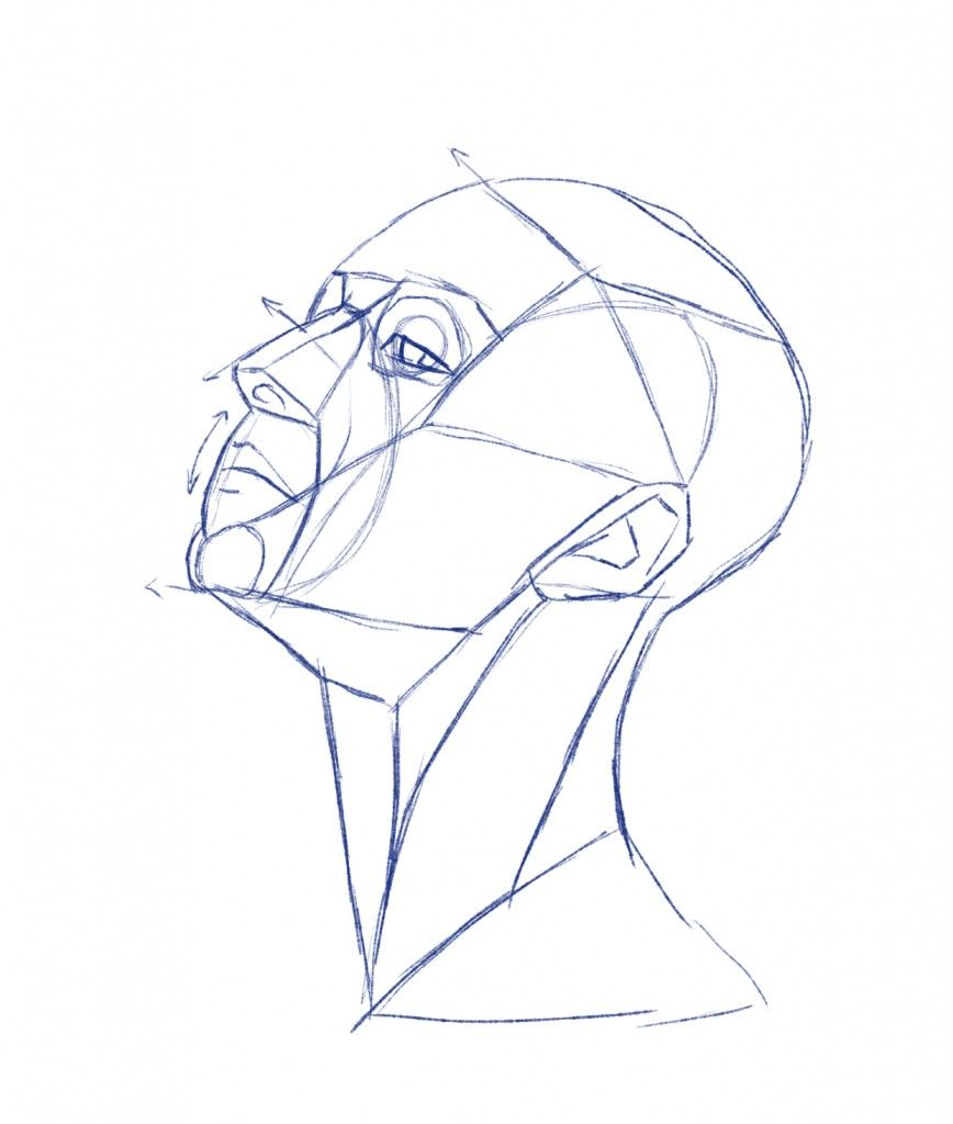 anatomical drawings of heads | Head and neck surface anatomy ...