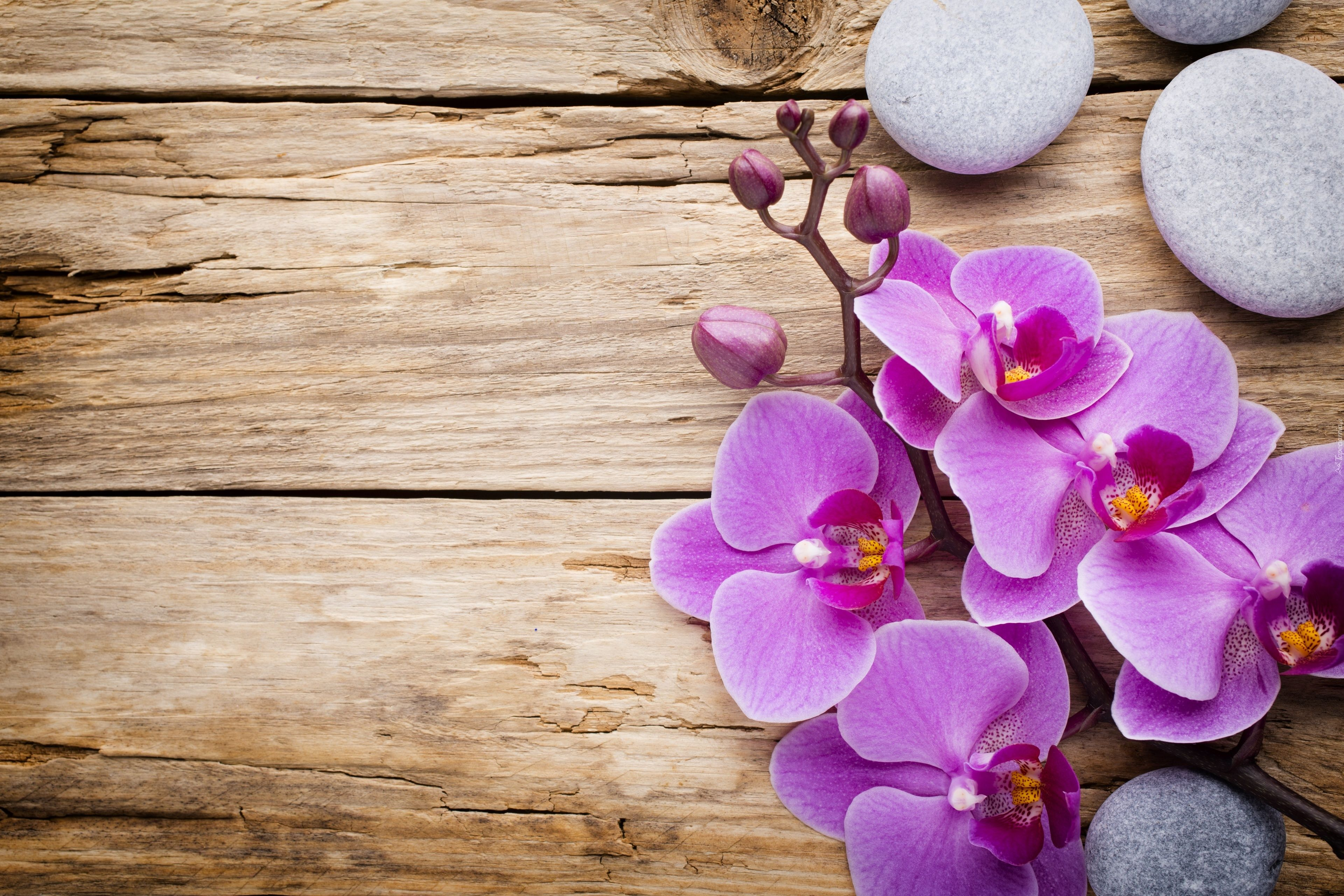 Storczyk Kamienie Deski Flower Backgrounds Flower Phone Wallpaper Orchid Illustration