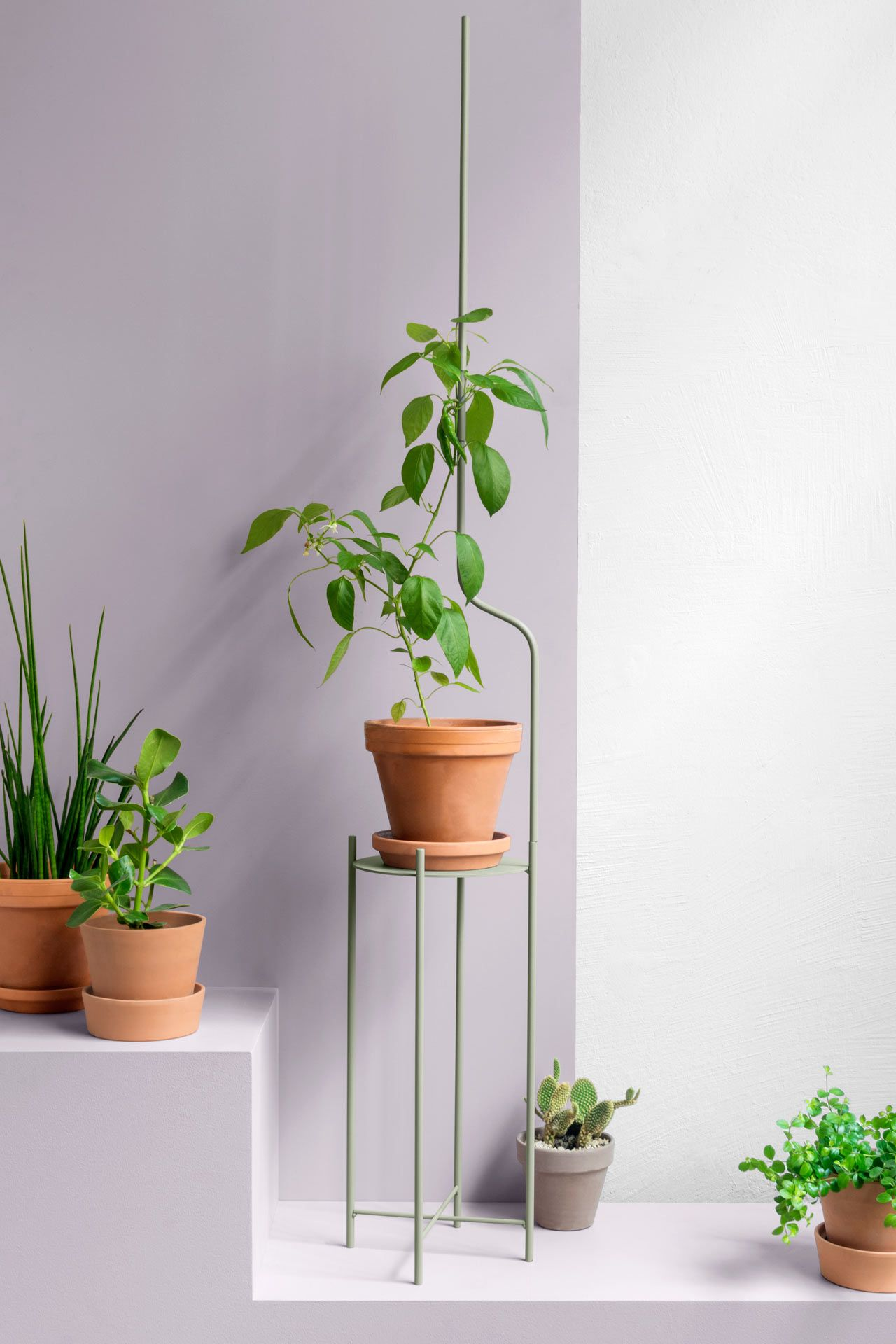 Swiss Design Collective Superlife Has Designed Liana A Plant Stand That Offers Your Plant Support Throughout Its Various Plant Stand Plants Modern Plant Stand