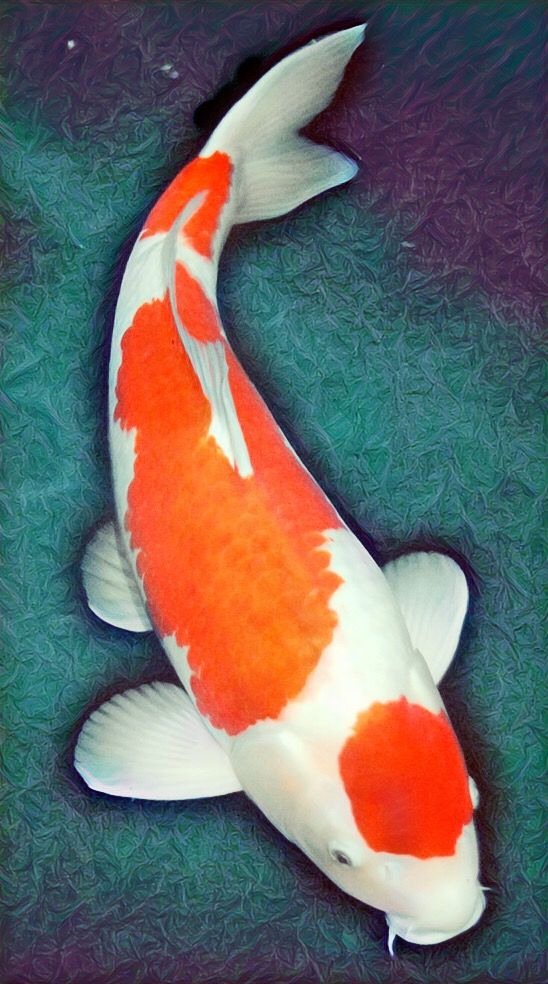 Pin By Sur Yanto On Paintings Canvas Inspiration Koi Painting Koi Fish Drawing Fish Painting