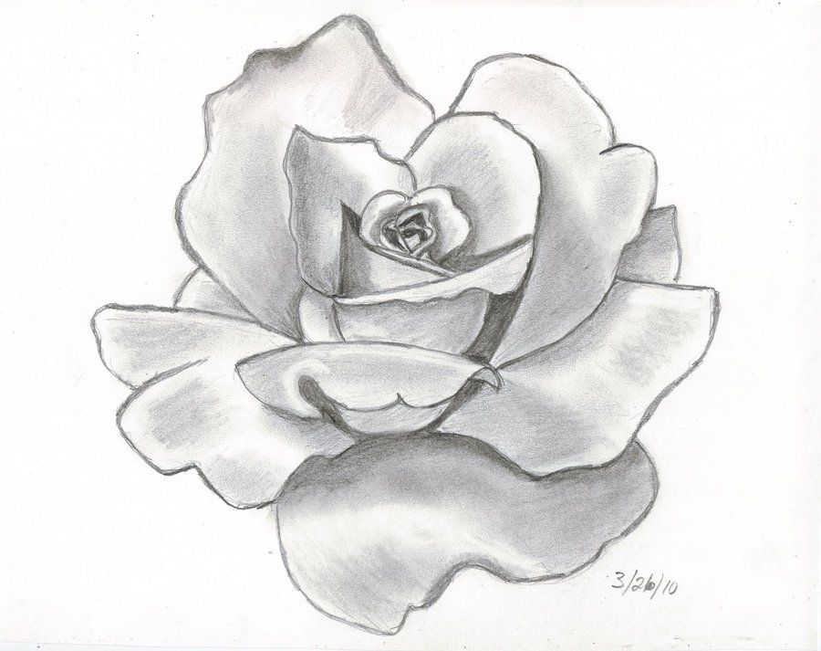 how to draw a realistic rose in pencil | Drawings | Pinterest | Rose