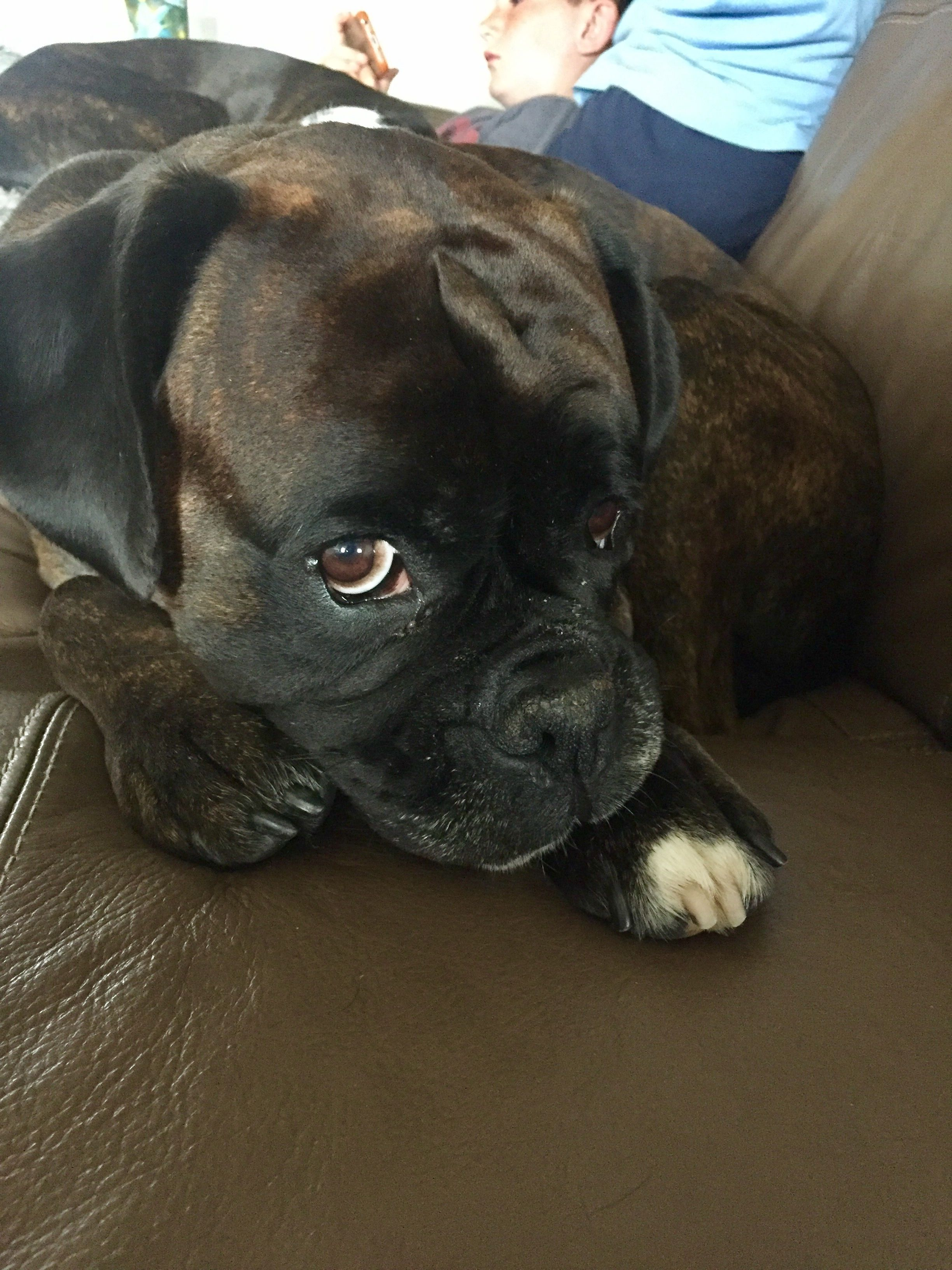 Pin By Dena Ford Johnson On Boxers Boxer Dogs Puppy Dog Eyes Dogs