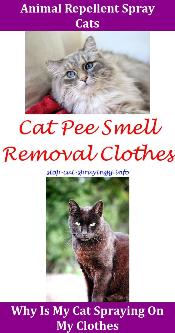 Davis Miconazole Spray Cat,cat Urine Pictures Spray To Keep Cats Off  Outdoor Furniture.
