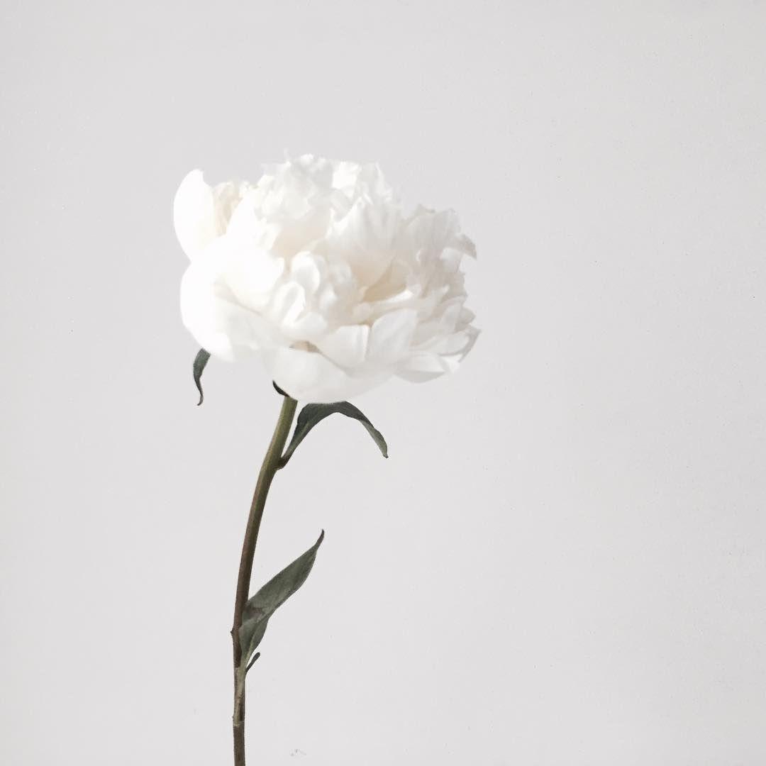 """""""작약, 마지막 남은거 후다닥 겟겟 - . . . #bloomingswan #flowers #peony  #블루밍스완 #플라워레슨 #작약"""""""