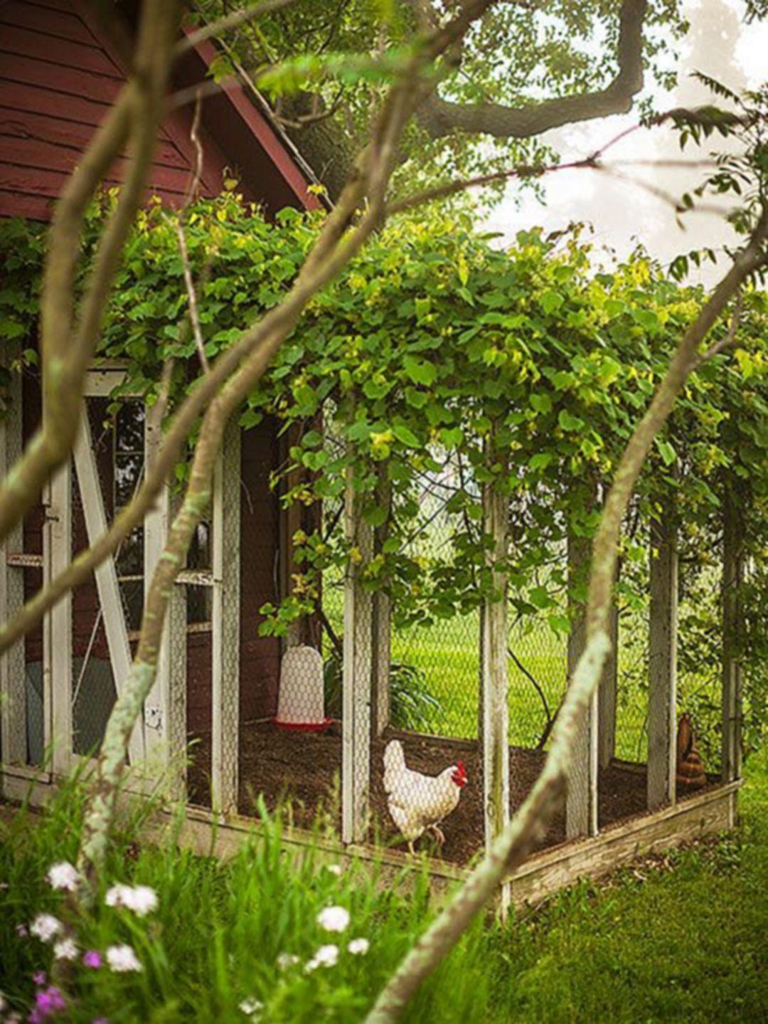 The Best 20 Most Effective and Easy Chicken Run Garden Inspiration https://hroomy.com/plants-garden/20-most-effective-and-easy-chicken-run-garden-inspiration/