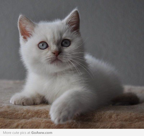 Veryviral Discover Amazing Stories From Around The World Cute Cats And Kittens Cute Animals Cats And Kittens