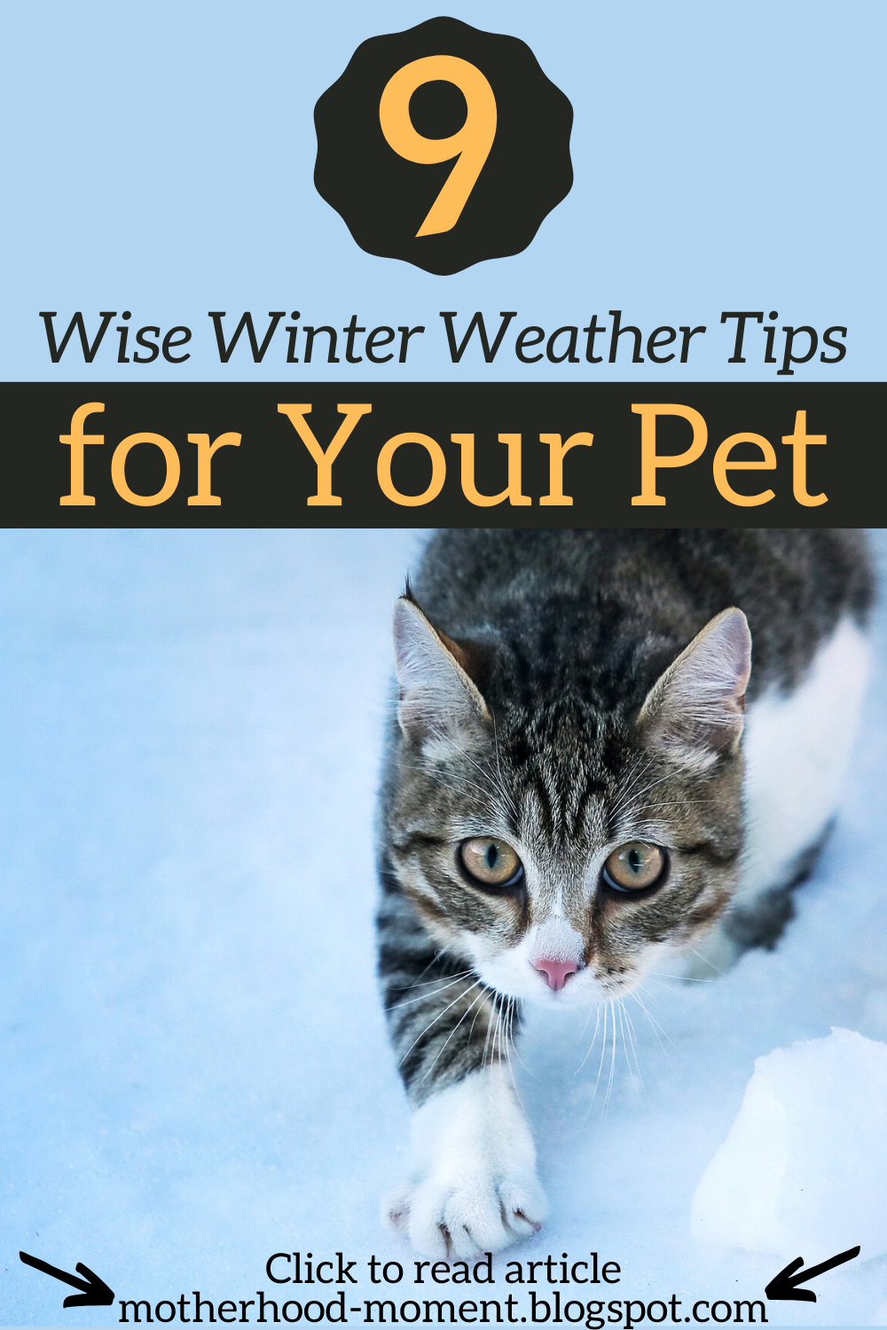 9 Wise Winter Weather Tips For Your Pet In 2020 Pets Your Pet Cat Advice