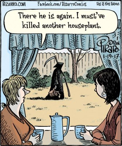 The Grim Reaper Of Houseplants Death Humor Bizarro Comic Cartoon Jokes