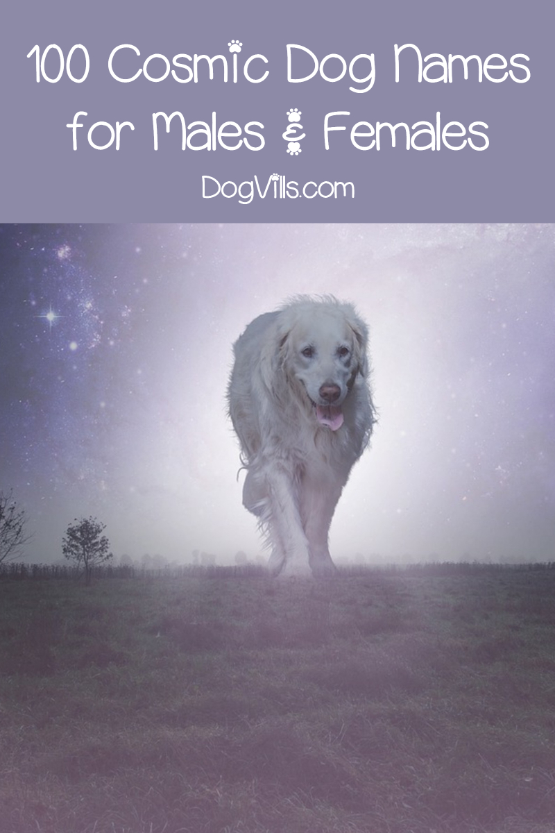 Top 100 Cosmic Dog Names For Males Females Dogvills Dog Names Female Dog Names Best Dog Names