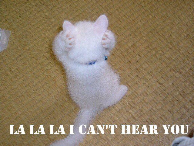 Funny Cat Quotes Cat Kitten